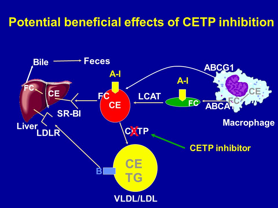Potential beneficial effects of CETP inhibition