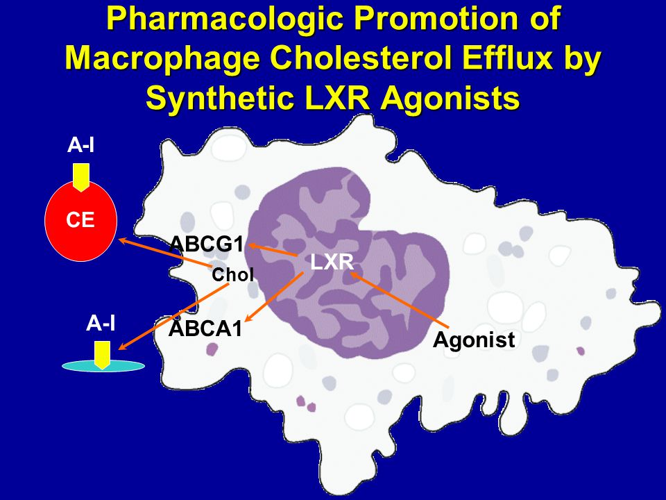 Pharmacologic Promotion of Macrophage Cholesterol Efflux by Synthetic LXR Agonists