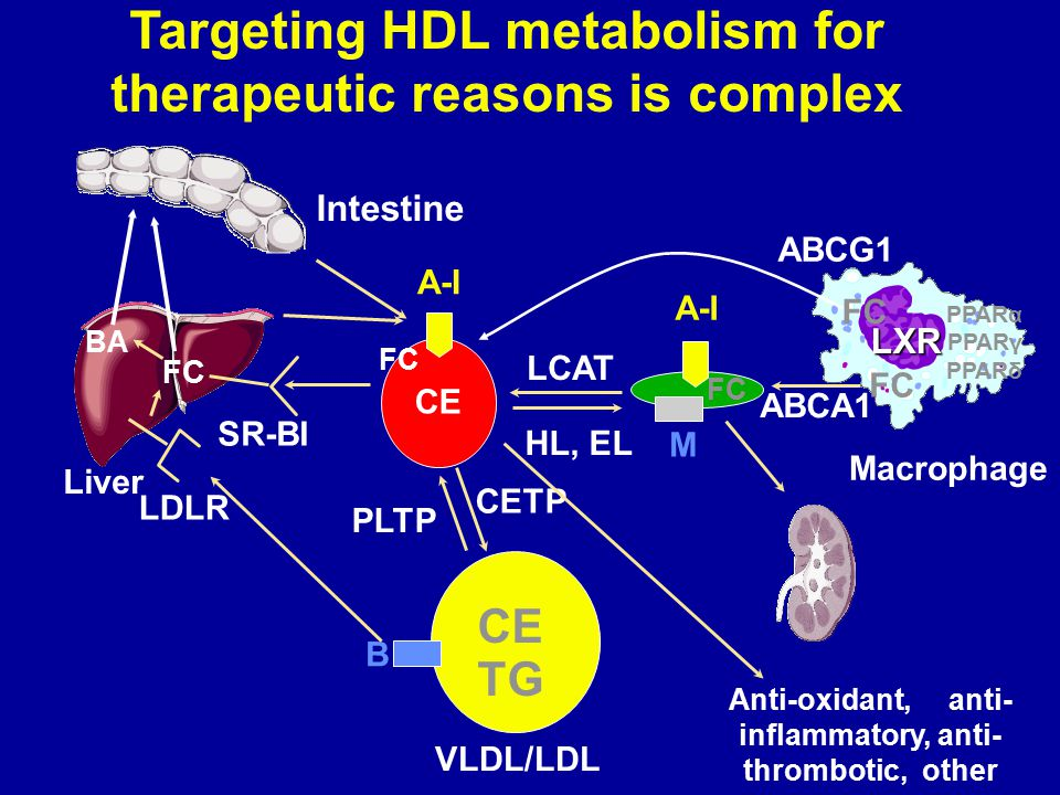 Targeting HDL metabolism for therapeutic reasons is complex