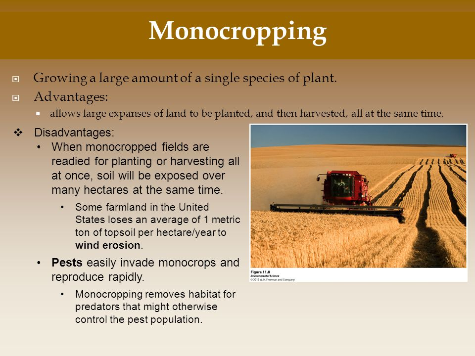 Monocropping Growing a large amount of a single species of plant.