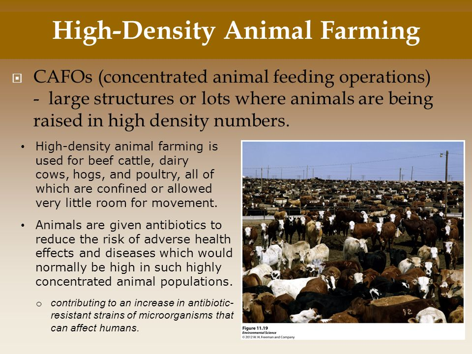 High-Density Animal Farming