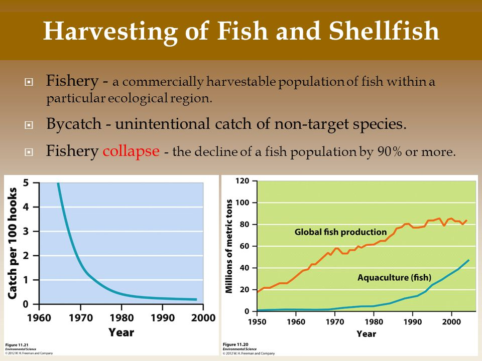 Harvesting of Fish and Shellfish
