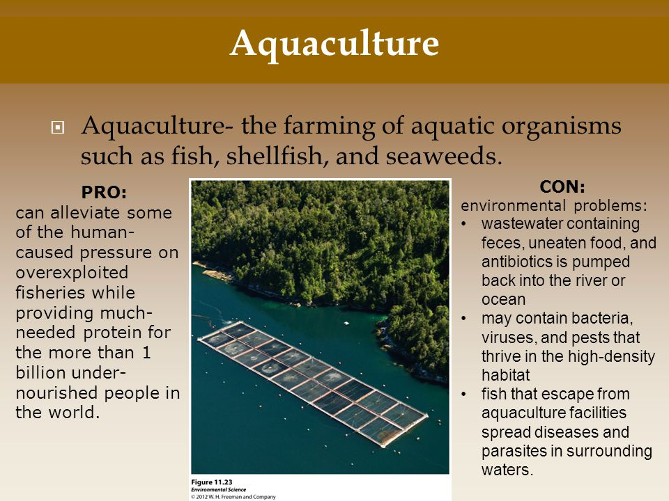Aquaculture Aquaculture- the farming of aquatic organisms such as fish, shellfish, and seaweeds. CON: