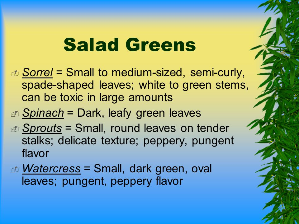 Salad Greens Sorrel = Small to medium-sized, semi-curly, spade-shaped leaves; white to green stems, can be toxic in large amounts.