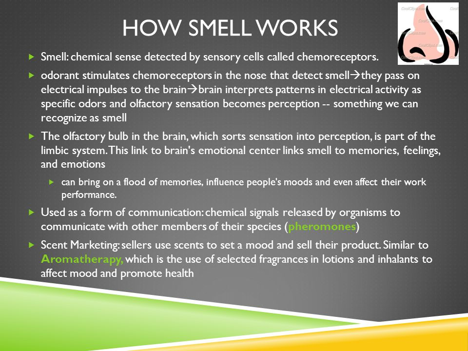 How SmeLL Works Smell: chemical sense detected by sensory cells called chemoreceptors.