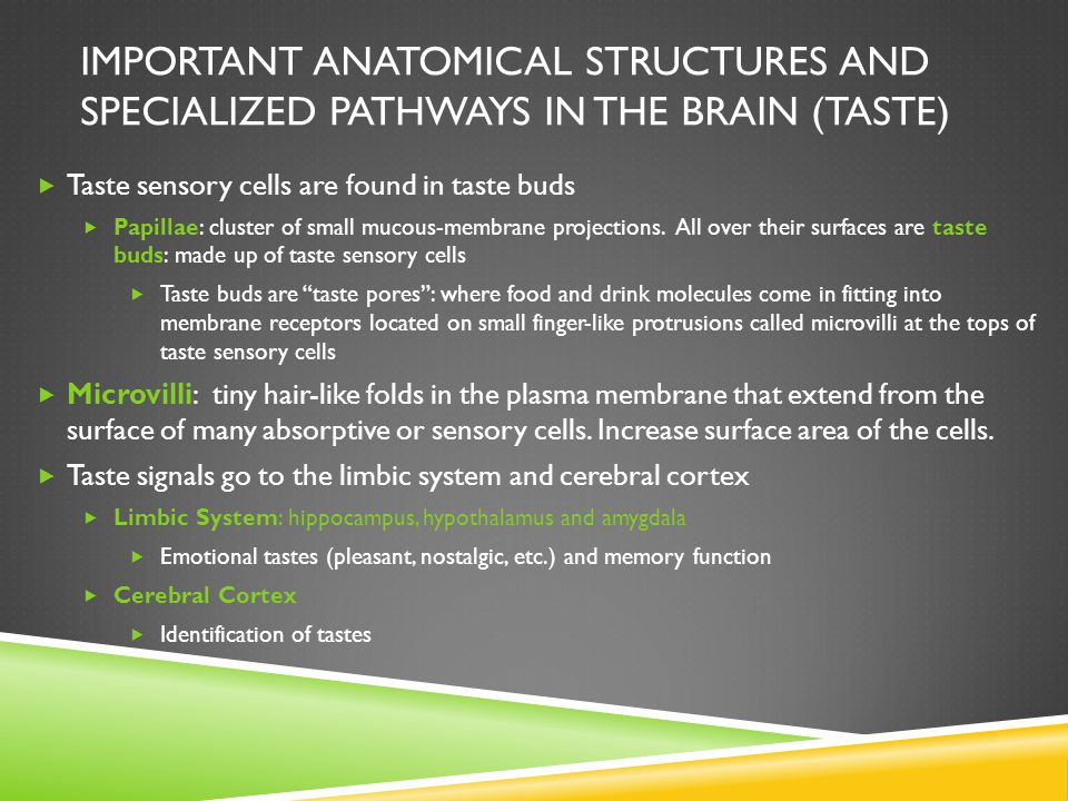 Important anatomical structures and specialized pathways in the brain (Taste)
