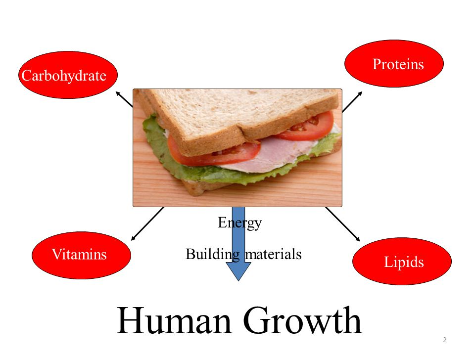Human Growth Food Proteins Carbohydrate Vitamins Lipids Energy