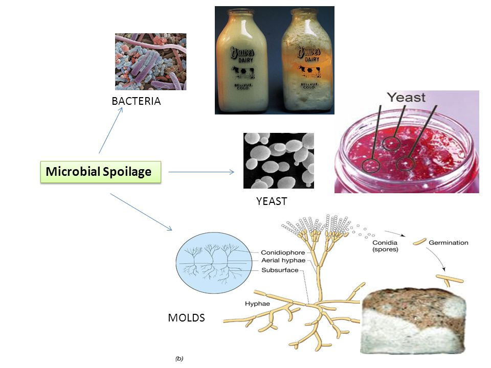 BACTERIA Microbial Spoilage YEAST MOLDS