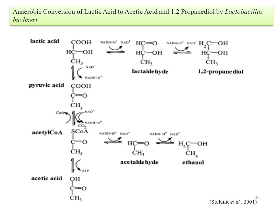 Anaerobic Conversion of Lactic Acid to Acetic Acid and 1,2 Propanediol by Lactobacillus buchneri