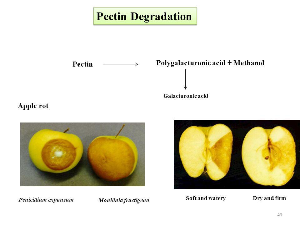 Pectin Degradation Polygalacturonic acid + Methanol Pectin Apple rot