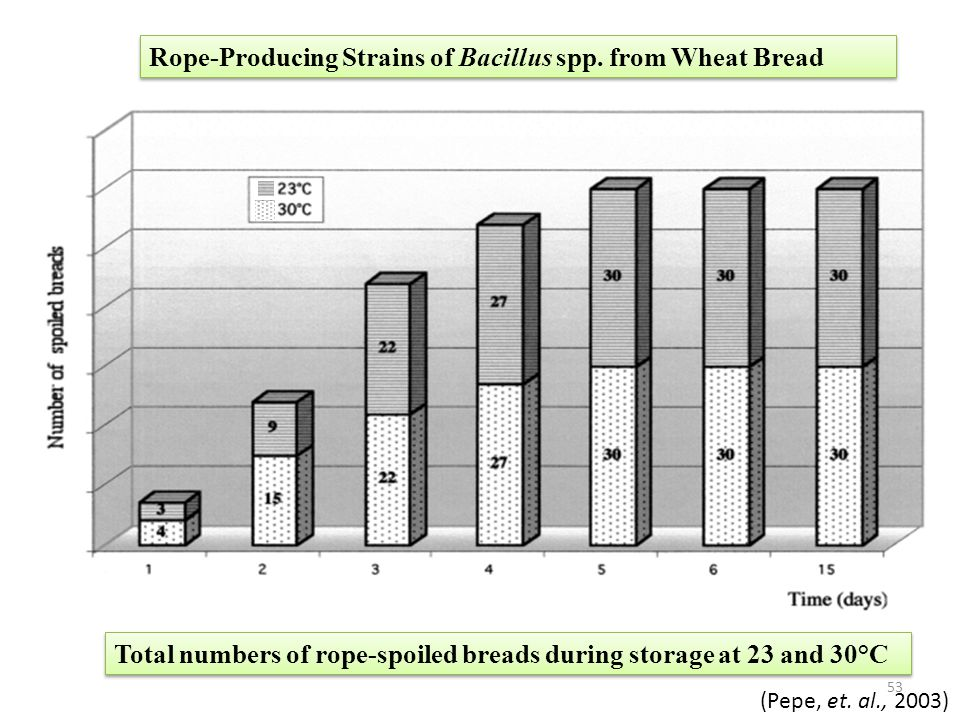 Rope-Producing Strains of Bacillus spp. from Wheat Bread