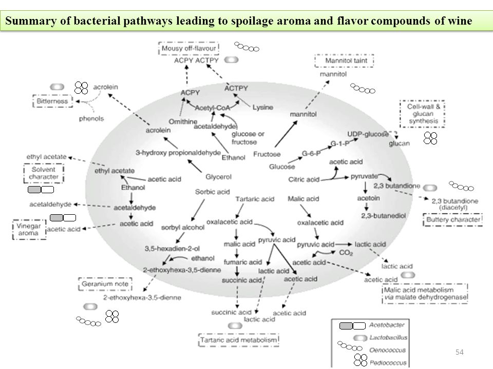 Summary of bacterial pathways leading to spoilage aroma and flavor compounds of wine