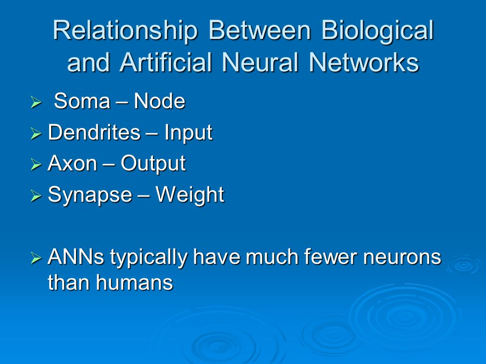 Relationship Between Biological and Artificial Neural Networks