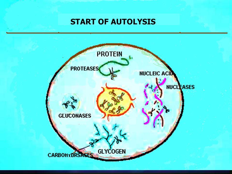 START OF AUTOLYSIS