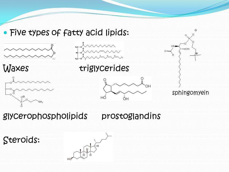 Five types of fatty acid lipids: