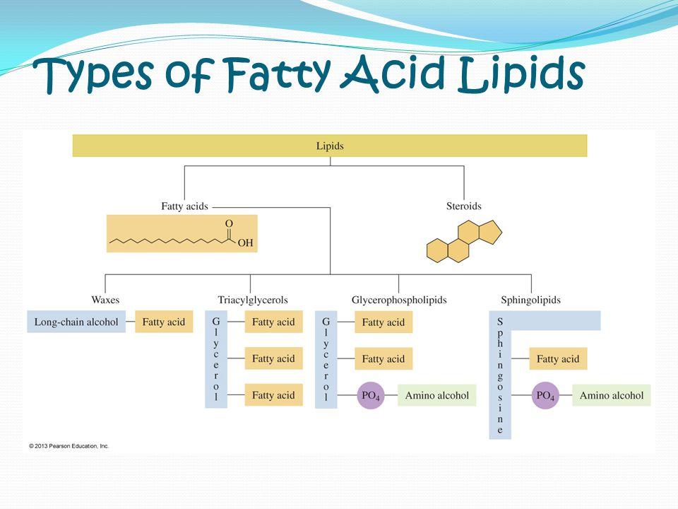 Types of Fatty Acid Lipids