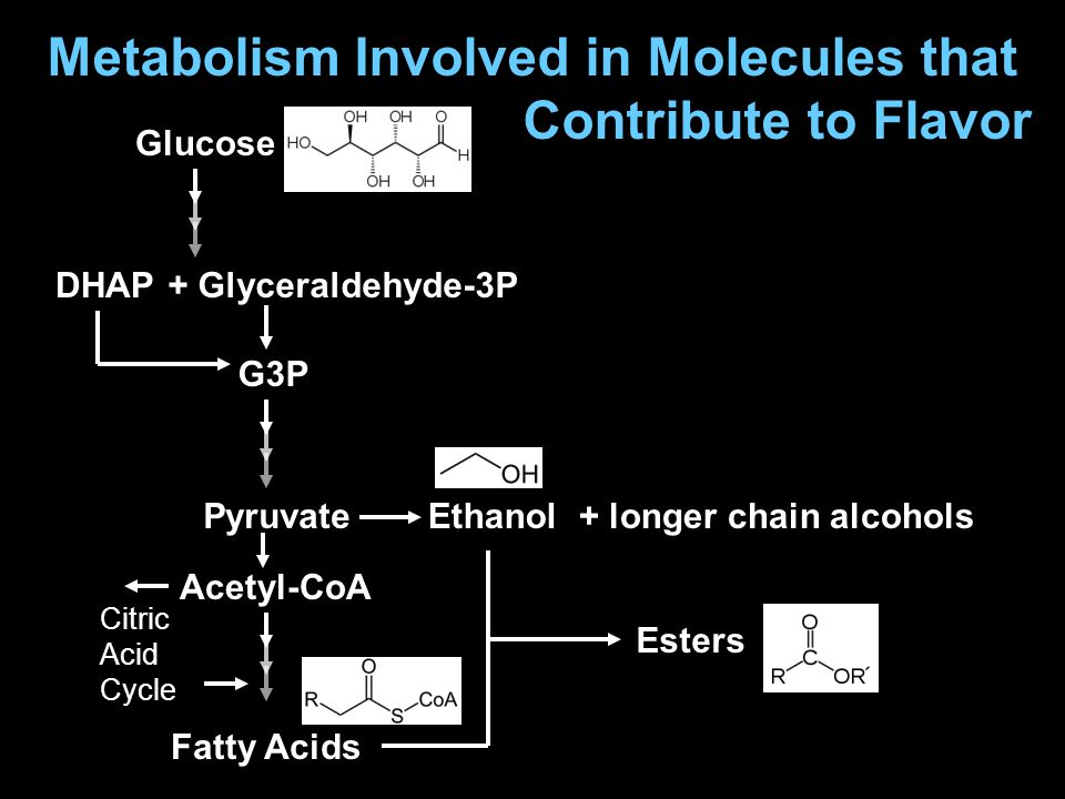Metabolism Involved in Molecules that Contribute to Flavor