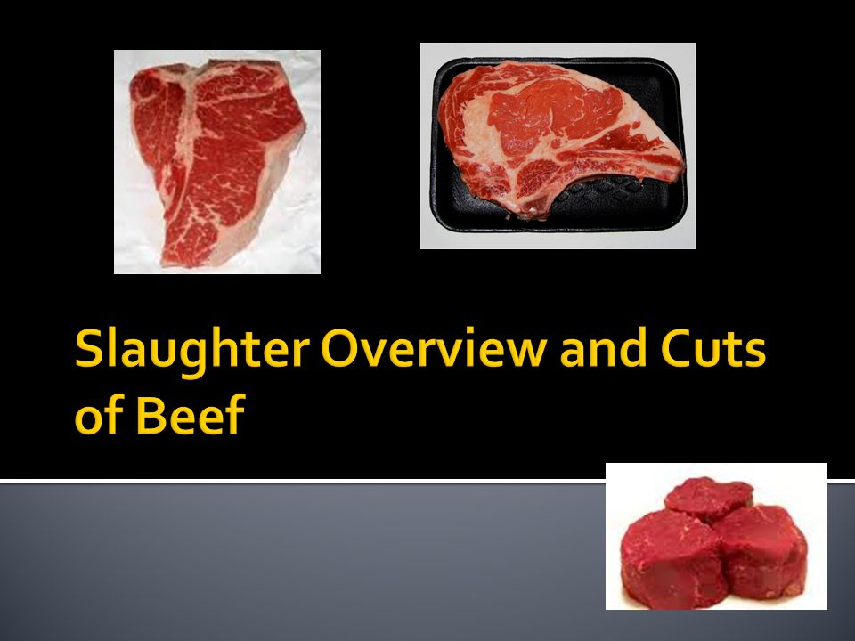 Slaughter Overview and Cuts of Beef
