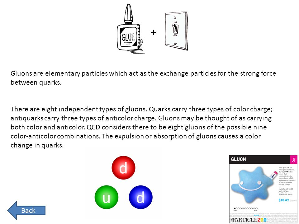 + Gluons are elementary particles which act as the exchange particles for the strong force between quarks.