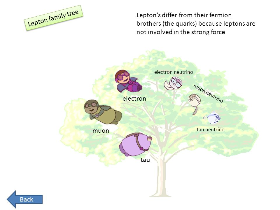 Lepton's differ from their fermion brothers (the quarks) because leptons are not involved in the strong force
