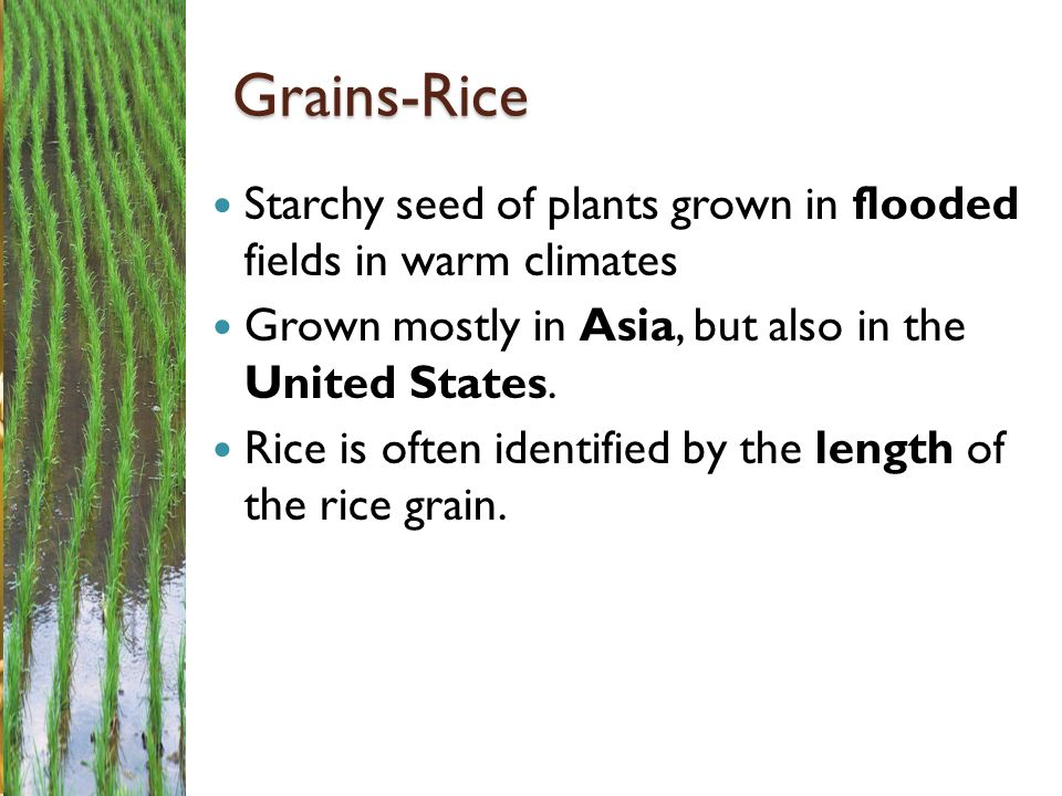 Grains-Rice Starchy seed of plants grown in flooded fields in warm climates. Grown mostly in Asia, but also in the United States.