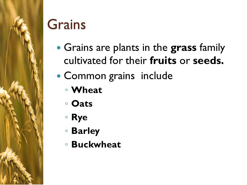Grains Grains are plants in the grass family cultivated for their fruits or seeds. Common grains include.