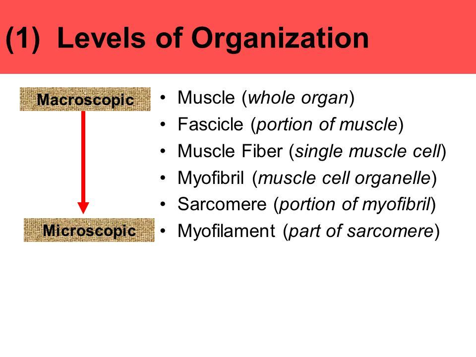 (1) Levels of Organization