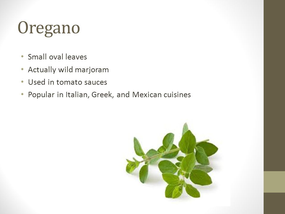 Oregano Small oval leaves Actually wild marjoram Used in tomato sauces