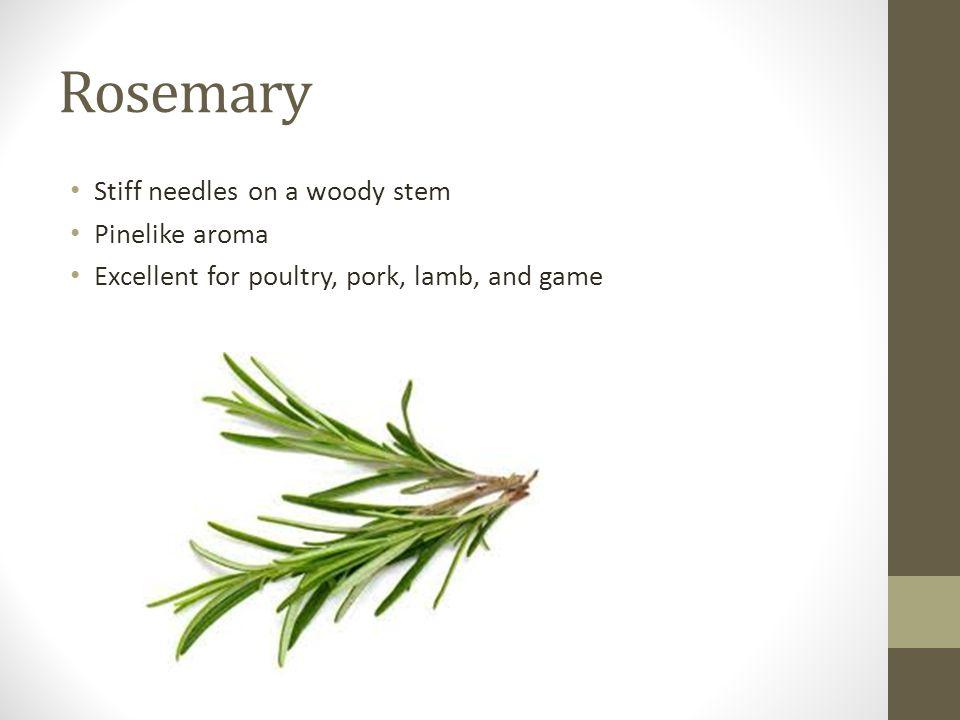Rosemary Stiff needles on a woody stem Pinelike aroma