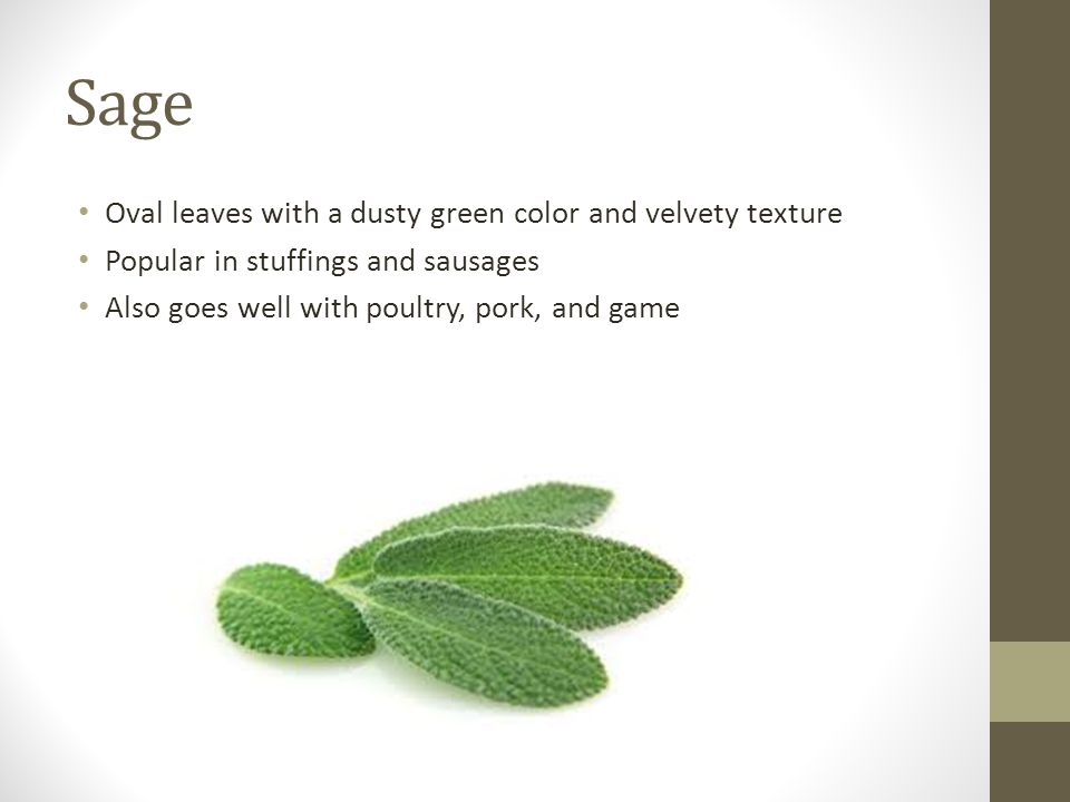 Sage Oval leaves with a dusty green color and velvety texture