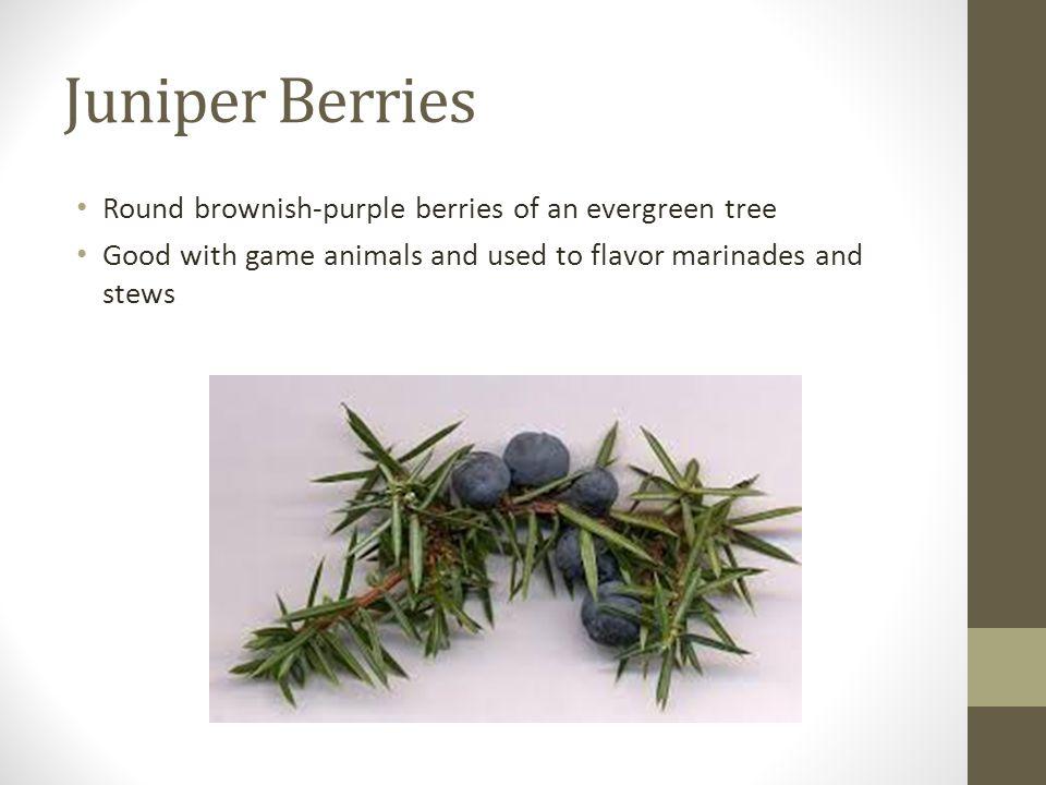Juniper Berries Round brownish-purple berries of an evergreen tree