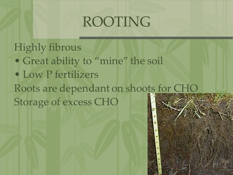 ROOTING Highly fibrous Great ability to mine the soil