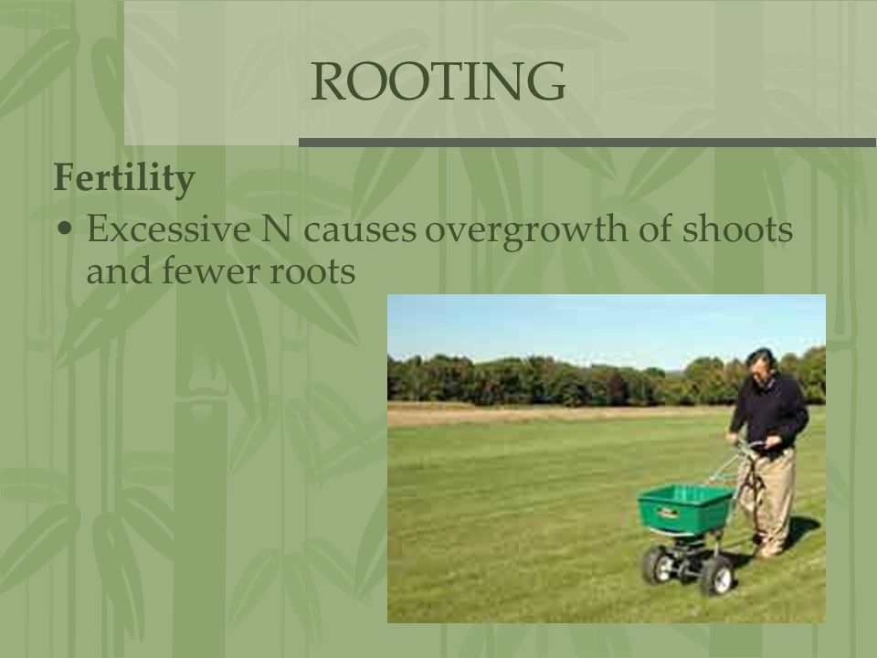 ROOTING Fertility Excessive N causes overgrowth of shoots and fewer roots