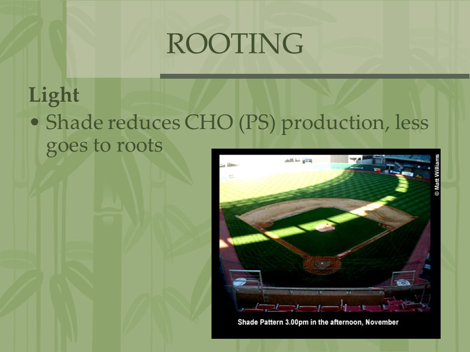 ROOTING Light Shade reduces CHO (PS) production, less goes to roots