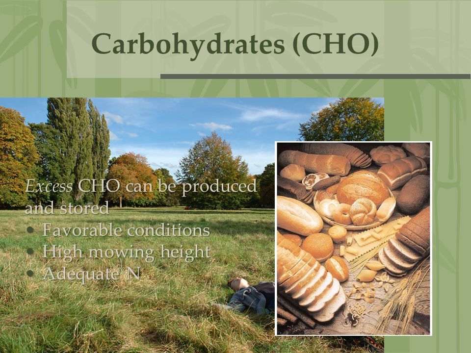 Carbohydrates (CHO) Excess CHO can be produced and stored
