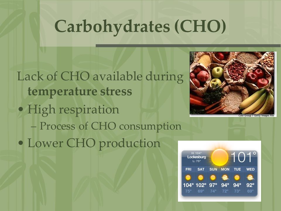 Carbohydrates (CHO) Lack of CHO available during temperature stress