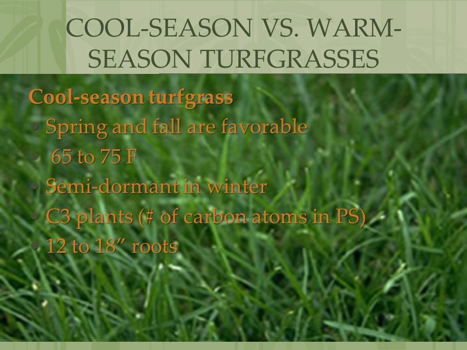 COOL-SEASON VS. WARM-SEASON TURFGRASSES