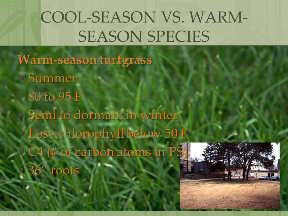 COOL-SEASON VS. WARM-SEASON SPECIES