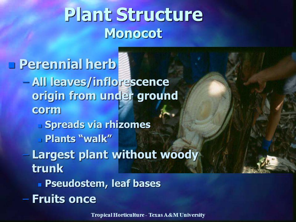 Plant Structure Monocot