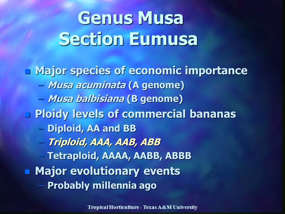Genus Musa Section Eumusa