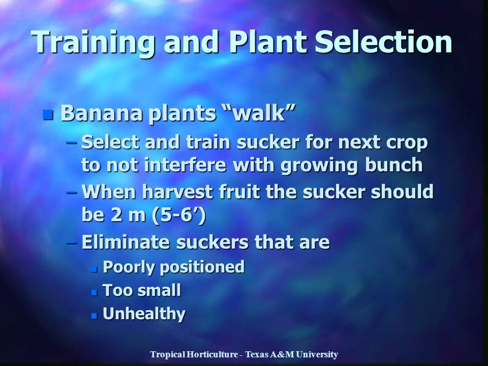 Training and Plant Selection