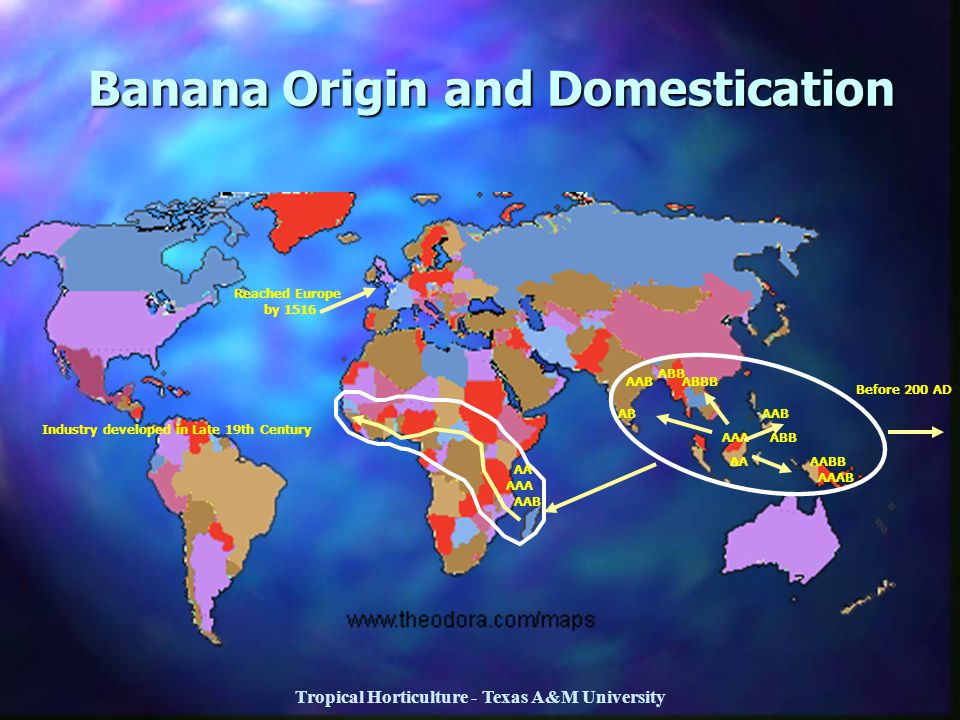 Banana Origin and Domestication