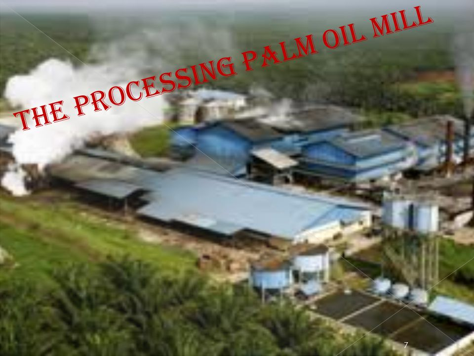 The processing palm oil mill