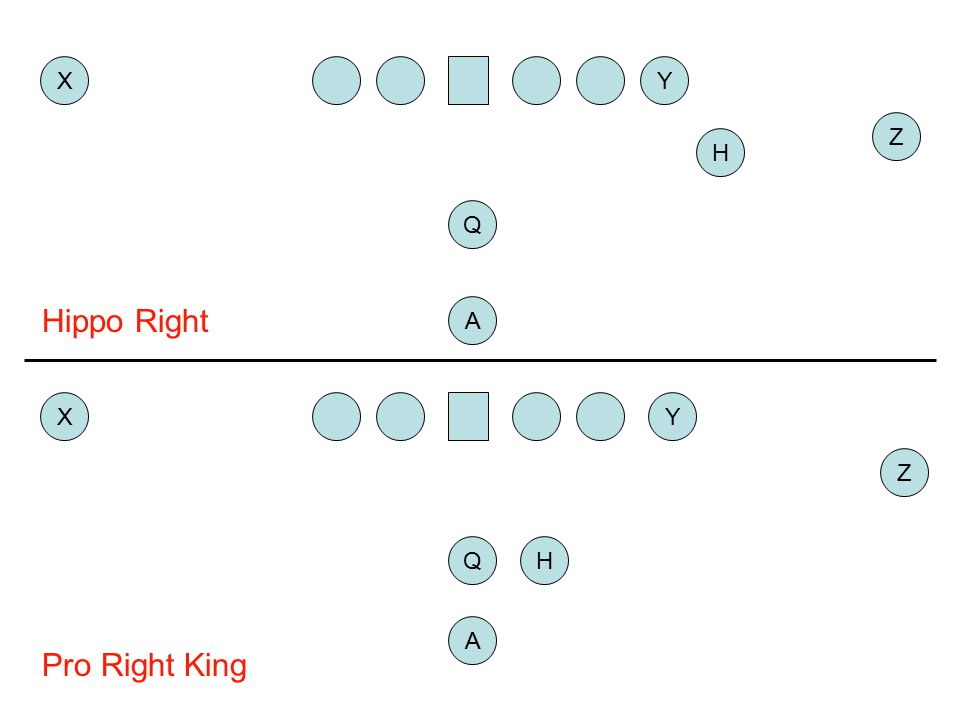 X Y Z H Q Hippo Right A X Y Z Q H A Pro Right King