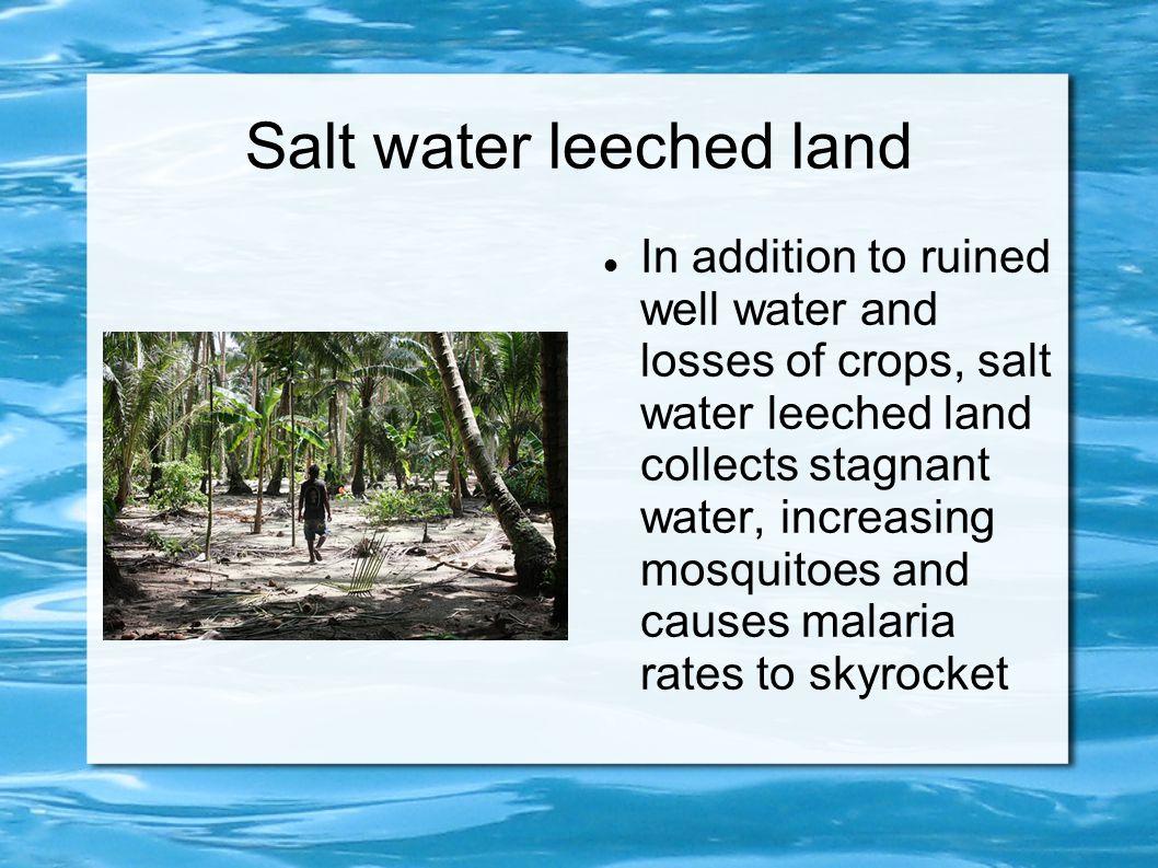 Salt water leeched land