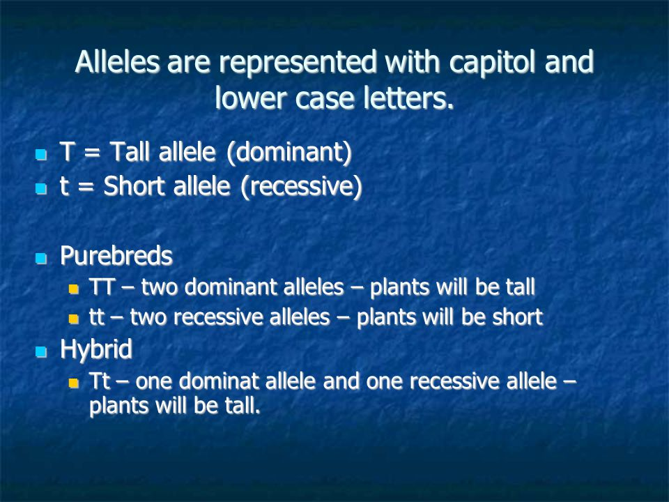 Alleles are represented with capitol and lower case letters.