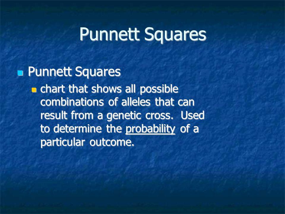Punnett Squares Punnett Squares