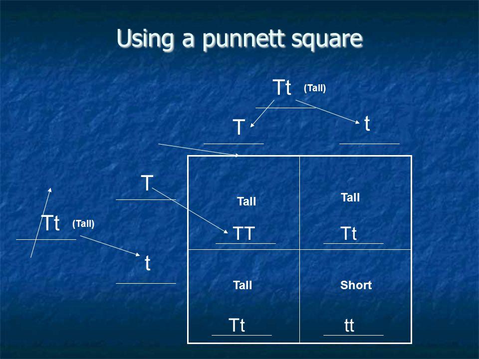Using a punnett square Tt t T T Tt t TT Tt Tt tt Tall Tall Tall Short