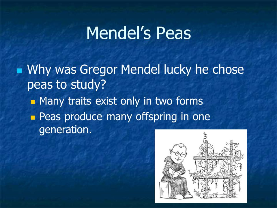 Mendel's Peas Why was Gregor Mendel lucky he chose peas to study