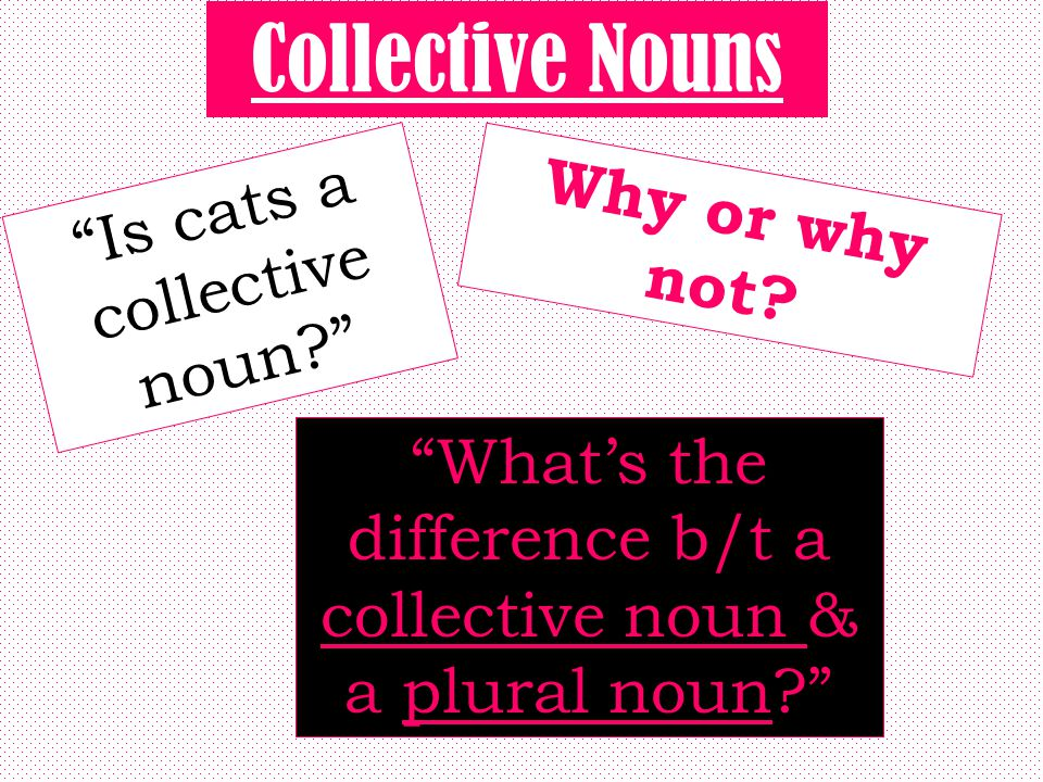 Collective Nouns Is cats a collective noun Why or why not